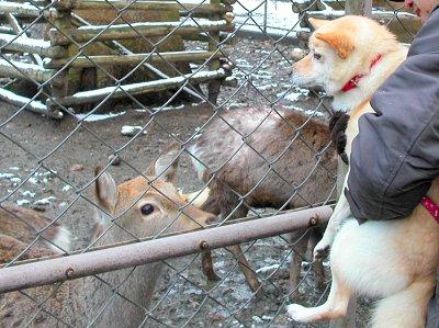 鹿さん、そんなに見つめないで?
