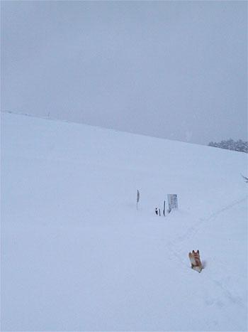 雪にいどむ