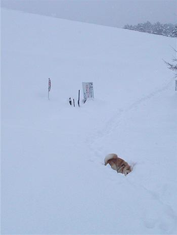 雪とたわむれる