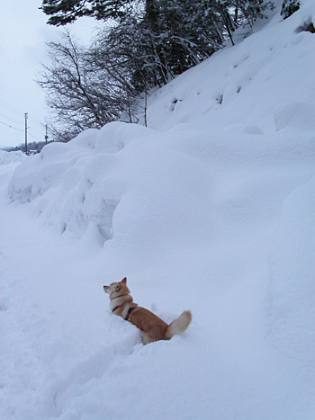 何度も雪に挑む