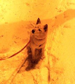 顔に積雪1センチ