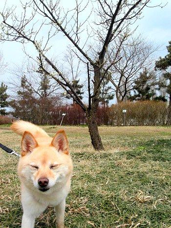 梅の木の下で、イヒヒ