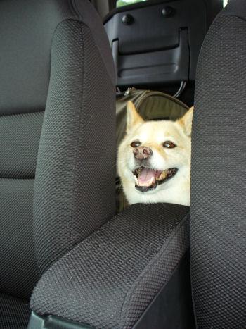 安全運転してよ!