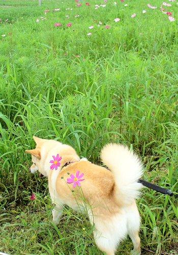 咲き始めました♪