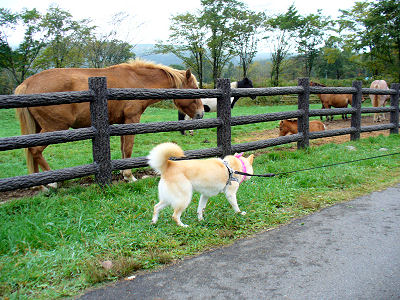 馬、牛、ヤギ、友好的な鳥・・・