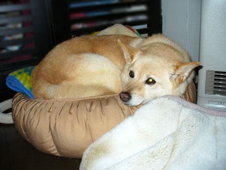 ぺこ君のベッド小さい。。。