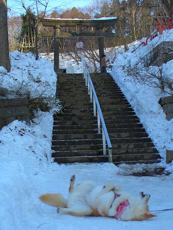 階段落ちじゃないわよー