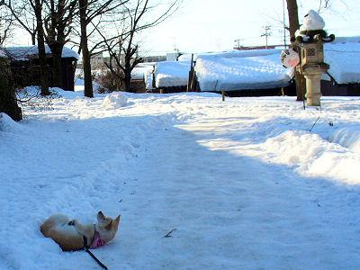 雪が多いです
