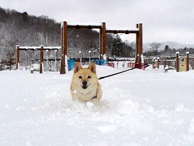 雪中行軍♪