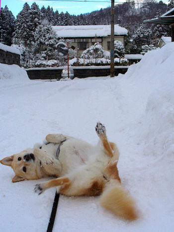 雪はたのし?♪