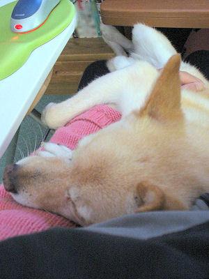 ピンクの枕♪