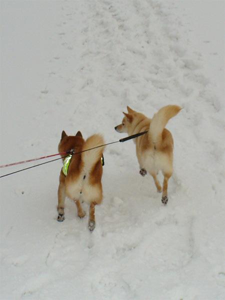ひなちゃんと雪原