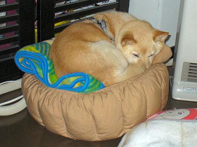 ペコ君のベッド最高