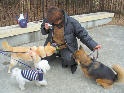 奈良のはなちゃん、相棒くん、ぶうこ
