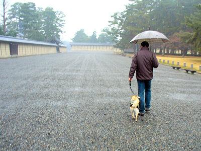 小雨からどしゃぶりに・・・