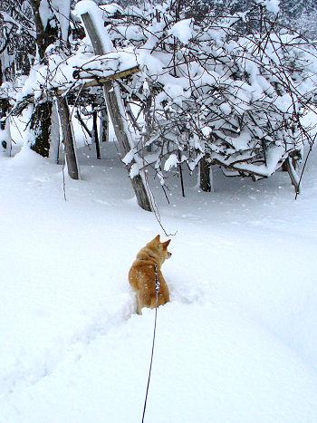 雪がふると。。。
