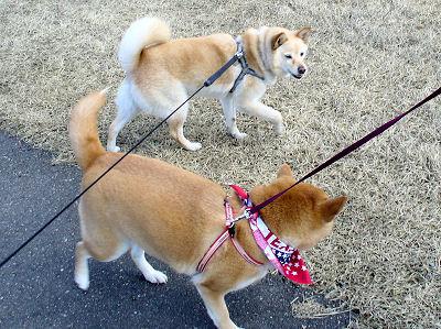 姉御、お散歩お願いします!