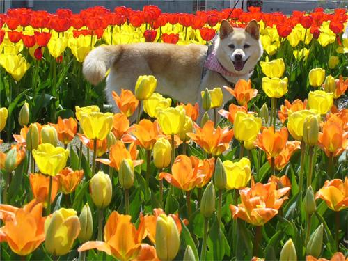 エロとりどり♪県の花