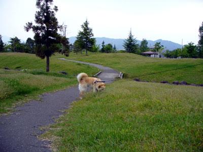 たしかに、芝が黄色いです