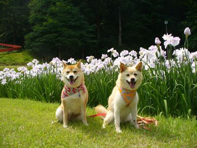 左:ラチコちゃん、右:ぶうこ。