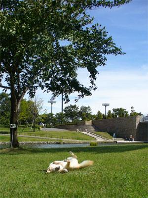 スポーツ公園の芝生♪