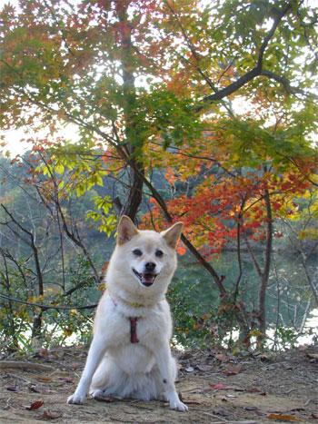 秋は夕暮れ♪