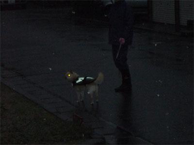 犬が歩いてますよ?