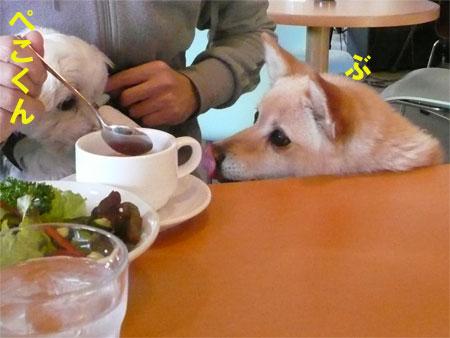ドツグカフェのぺこくん