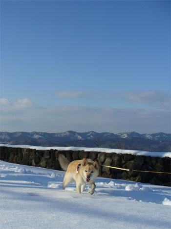 今日は、ここが山頂よ!