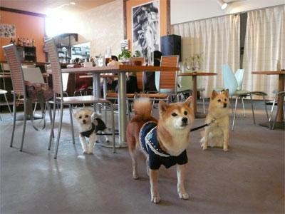 新潟亀田のドッグカフェだよ?