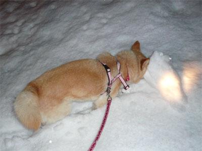 雪だるまつくろ♪