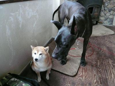 看板犬と、ひなちゃん♪