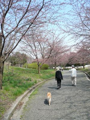 木が桜色に