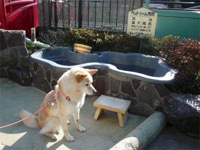 鬼怒川温泉です。効能は・・・
