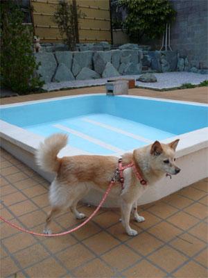 プールもあるでよ。