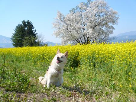 2007年5月 飯山