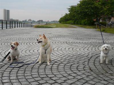 やすらぎ提散歩