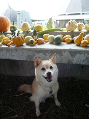 かぼちゃも好き♪