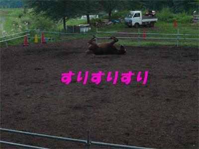 馬もすりすり