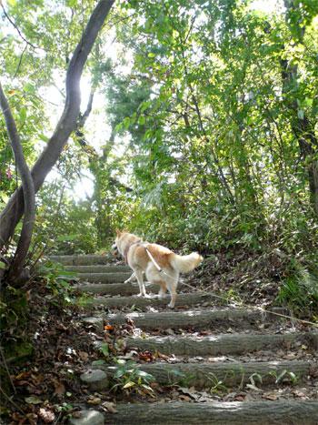 散策開始!