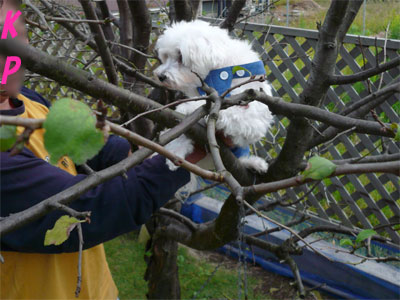 木登りしたり。