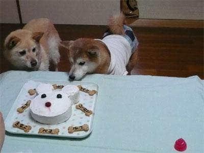 2007きなこママさん作ワンコのケーキ