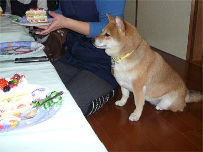 正しいケーキの町方です。