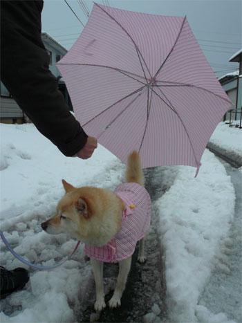じいや、傘さして