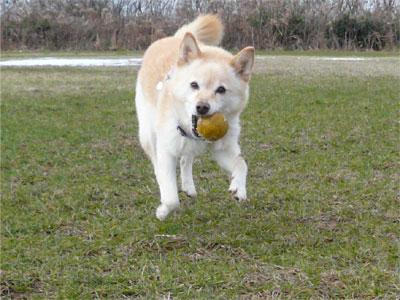 ボールがちべたい。