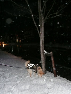 今日も雪なのよ。。。