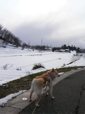 道路に雪ないんだけどね