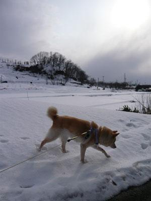 雪たくさんあるでしょ