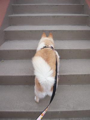 大人の階段の?ぼるぅ?♪