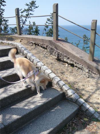 階段もへっちゃら?♪